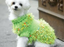 Fancy Free Dog Sweater Knit Pattern