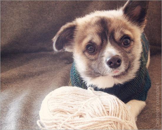Free Knit Dog Sweater