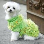 Fancy Free Dog Sweater Knit Pattern