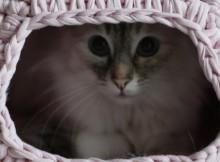Crochet a Snuggly Cat Pod
