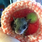 Knit and Crochet Orphan Animal Nests